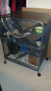 4 Rats with Like-New $300.00 Multilevel  cage free to good home