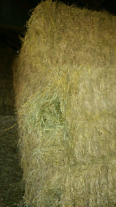 Large Square bales of hay