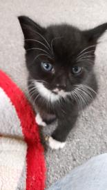 cute kitten just 1 left