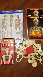 Skeleton books and wall chart (4 items)