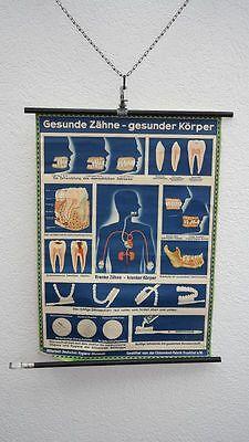 Lehrtafel Schulwandkarte gesunde Zähne Körper Unterricht Wandkarte Rollkarte