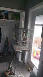 Breeding pair of  Zebra Finches for sale