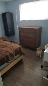 Basement bedroom in family home ideal for student