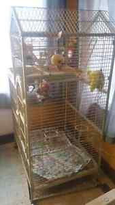 Bird cage comes with birds still have them