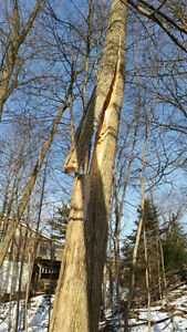 Tree removals, storm clean up , pruning, and felling of trees Cambridge Kitchener Area image 8