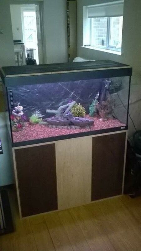 Fluval roma 200l tropical fish tank setup in morpeth for Aquarium 200l