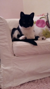 LOST BLACK & WHITE MALE CAT
