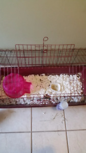 Guinea Pig Cage And Accessories For Only $45 OBO