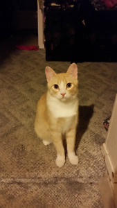 Rehoming orange cat (Boots)