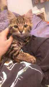 Kitten to give away to a good home.
