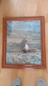 Framed animal prints