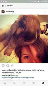 Best Holland lop bunny you will ever find