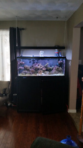 75 gallon salt water tank