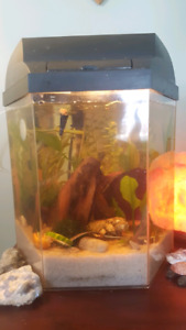 ISO Bettas that may need a new home.