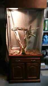 2 Ball Pythons and enclosure  Peterborough Peterborough Area image 1