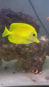 1 Yellow Tang- 3 Clownfish- 2 Green Chromis- 2 Shrimp- 2 Snails