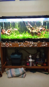 40 gallon with live plants
