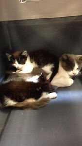 Ca-R-Ma Sussex Urgently Needs Foster Homes!
