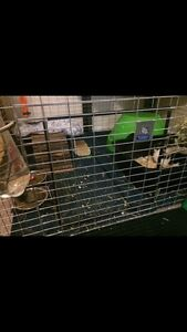 Pet Lodge Large Wire Rabbit Cage
