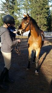 12 year old mustang mare