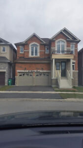 Brand New Never Lived House For Rent