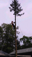 Tree Trimming & Removals