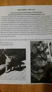Lost big tabby cat/gros chat perdu