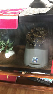 colombian boa and set up