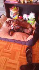 Available dog sitter/foster/daytime care