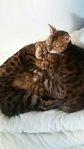2 Bengals need a new home!