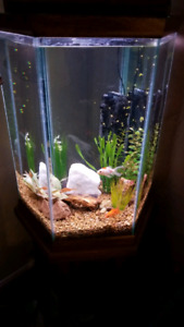 Hexagon Fish Tank 30 Gallon
