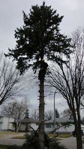 TIMBER TREE REMOVAL