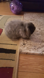 2 neutered male bunnies to rehome!