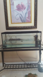40 Gallon turtle tank with 2 turtles and accessories