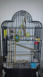 All Living Things Parrot Cage For Sale CAGE ONLY NO BIRD