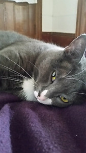 Cat in need of loving home