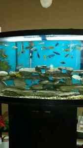 75 gallon aquarium package Peterborough Peterborough Area image 3