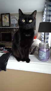 Female Black Cat Missing