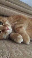 !SOLD! Spayed, orange female tabby cat available to a good home