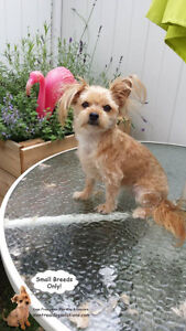 *FULL FOR HOLIDAYS* Dog Daycare & sleepovers for small dogs West Island Greater Montréal image 5