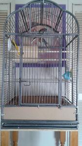 grosse cage avec 1 cockatiel et 6 pison