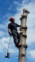 United Tree Service Inc-Kenora's #1 Tree Service *FREE QUOTES*