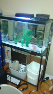 38 gal aquarium with stand and accessories