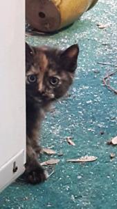 Five Beautiful Kittens