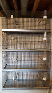 Canary and Cages for sale