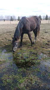 2 horses for $500