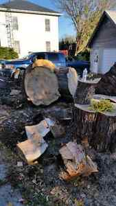 Wood for firewood or art, furniture