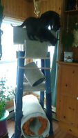 Cat Tower for Sale
