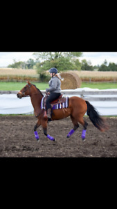 2 mares up for lease or possible sale