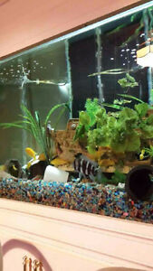 Aquarium and Fish for Sale Windsor Region Ontario image 4